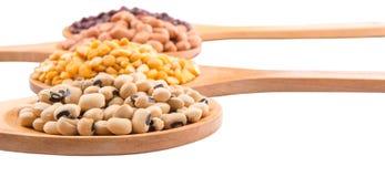 Ground Nut, Bean And Lentils VIII. Ground nut, dal lentils, black eye bean and adzuki bean on wooden spoon Royalty Free Stock Image