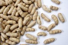 Ground nuts. Hybrid ground nuts Royalty Free Stock Image
