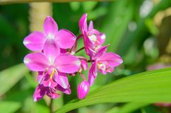 Ground orchid flower Stock Photos