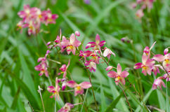 Ground orchids Stock Photo
