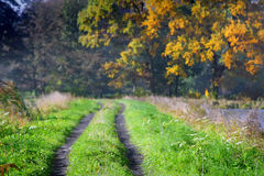 Ground path between meadow Royalty Free Stock Photos
