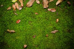 Ground path with moss Royalty Free Stock Photo