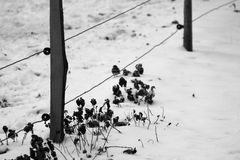 The ground of Pinette island in Saint-Sebastien-sur-Loire, France, is covered with snow Royalty Free Stock Photography