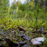 Ground plants in woods  Stock Image