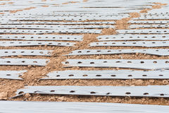 Ground with plastic protecting strips for plantation Royalty Free Stock Photography