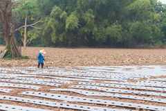 Ground with plastic protecting strips for plantation Stock Photos