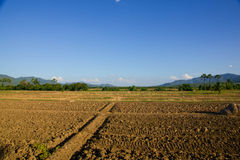Ground preparation. Planting rice royalty free stock photography