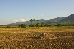 Ground preparation. Planting rice in thailand royalty free stock photos