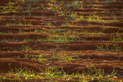 Ground red with green grass Royalty Free Stock Images