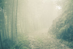 Ground road through bamboo forest at misty morning Stock Image
