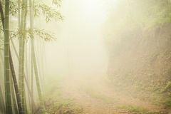 Ground road through bamboo forest at misty morning Royalty Free Stock Photography