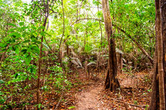 Ground road browm color in jungle Stock Photo