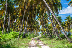 Ground road through the coconut palms. Dominican republic Royalty Free Stock Photo