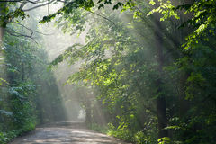 Ground road crossing forest with beams of light Stock Photo