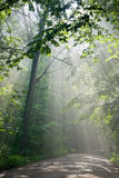 Ground Road Crossing Forest With Beams Of Light Royalty Free Stock Image