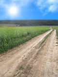Ground road crossing the sunflower field Stock Photography