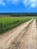 Ground road crossing the sunflower field. In the direction to the forest Stock Photo