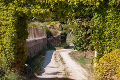Ground road. A dirt road surrounded by greenery on the island of Mallorca, Spain Royalty Free Stock Photography