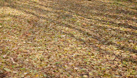 Ground road and dry leaves lying Stock Images