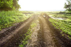 Ground road in a field with green grass Royalty Free Stock Image