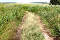A ground road in a field with high grass in Krasnoyarsk area in Russia Stock Photography
