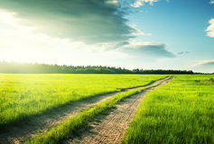 Ground road and field of spring grass Stock Images