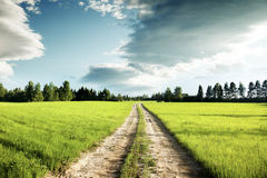 Ground road and field of spring grass Royalty Free Stock Photos