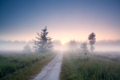 Ground road into fog at sunrise Royalty Free Stock Photo