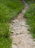 Ground road, Fresh green grass Royalty Free Stock Photography
