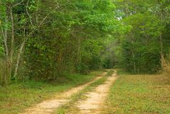 Ground road in jungle Royalty Free Stock Photography
