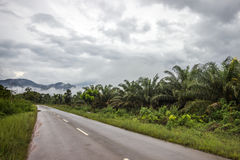 Ground road in jungle Royalty Free Stock Photos