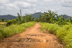 Ground road in jungle Royalty Free Stock Image