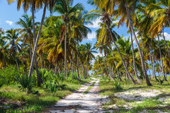 Ground road in the jungle. Dominican republic Royalty Free Stock Photos