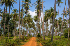 Ground road in jungle , Thailand . Royalty Free Stock Image