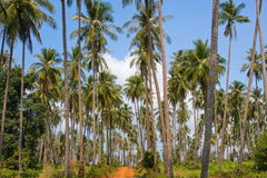 Ground road in jungle. Thailand. Stock Photography