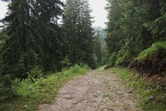 Ground road through old green wood in mountain area. Horizontal color image Royalty Free Stock Images