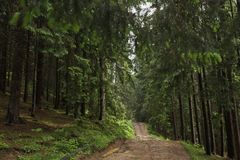 Ground road through old green wood in mountain area. Horizontal color image Royalty Free Stock Image