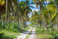 Ground road through the palm trees. Dominican republic Stock Image