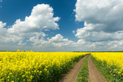 Ground road in rapeseed field Stock Photo