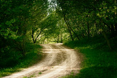 Ground road in summer forest Royalty Free Stock Photo