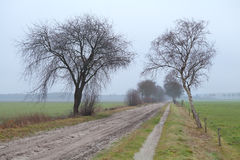 Ground road between trees in fog Royalty Free Stock Photos
