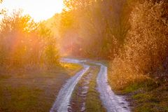 Ground road among the trees during the sunset, landscape in warm red tones_ stock photo
