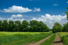 Ground road in the wheaten field and beautiful cloudy. Spring landscape stock photography
