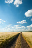 Ground road in wheaten field. Royalty Free Stock Images