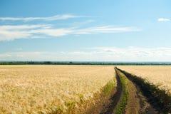 Ground road in wheaten field. Stock Photo