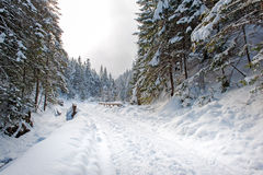 Ground road in the winter forest Royalty Free Stock Image