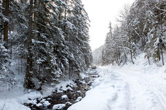 Ground road in the winter forest Royalty Free Stock Photography
