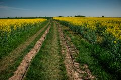 Ground road in yellow flower field with sun, beautiful spring landscape, bright sunny day, rapeseed stock image