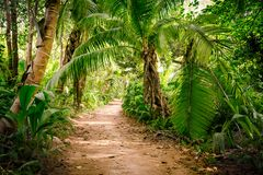 Ground rural road in the middle of tropical jungle Stock Photography