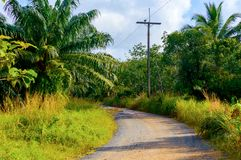 Ground rural road with tropical plants and blue sky with white c. Louds and sunshine Royalty Free Stock Image